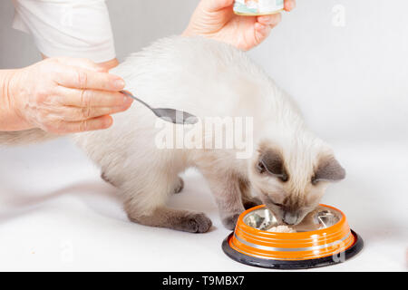 Hands of an elderly woman put food to the cat. - Stock Photo