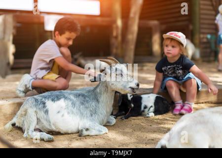 little boy and girl feeding goat at farm - Stock Photo