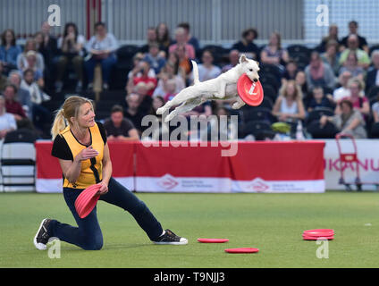 Dortmund, Germany. 19th May, 2019. Dog trainer, Sabine Wolff, and her dog give a 'Flying Dog' performance during the Hund and Katz exhibition in Dortmund, Germany, on May 19, 2019. The three-day event hosted by German Kennel Club, presents dogs and cats of more than 200 breeds from around the world. Credit: Lu Yang/Xinhua/Alamy Live News - Stock Photo