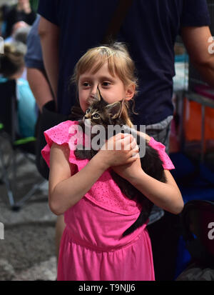 Dortmund, Germany. 19th May, 2019. A girl interacts with a little Maine Cat during the Hund and Katz exhibition in Dortmund, Germany, on May 19, 2019. The three-day event hosted by German Kennel Club, presents dogs and cats of more than 200 breeds from around the world. Credit: Lu Yang/Xinhua/Alamy Live News - Stock Photo