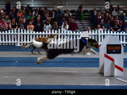 Dortmund, Germany. 19th May, 2019. Dogs are seen in the 'Flyball' competition during the Hund and Katz exhibition in Dortmund, Germany, on May 19, 2019. The three-day event hosted by German Kennel Club, presents dogs and cats of more than 200 breeds from around the world. Credit: Lu Yang/Xinhua/Alamy Live News - Stock Photo