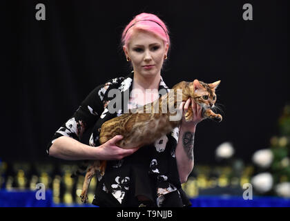 Dortmund, Germany. 19th May, 2019. A Bengal Cat is seen during the Hund and Katz exhibition in Dortmund, Germany, on May 19, 2019. The three-day event hosted by German Kennel Club, presents dogs and cats of more than 200 breeds from around the world. Credit: Lu Yang/Xinhua/Alamy Live News - Stock Photo