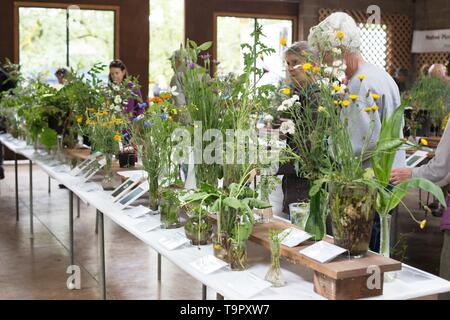 People viewing wildflower specimens on display at the Wildflower Festival at Mount Pisgah Arboretum in Eugene, Oregon, USA. - Stock Photo