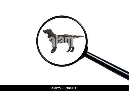 Irish Setter, Silhouette of dog on white background, view through a magnifying glass - Stock Photo