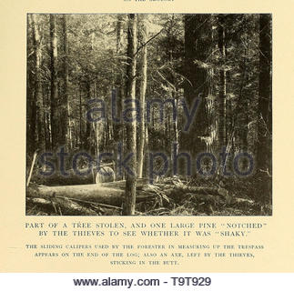 Annual report of the Forest, Fish and Game Commission of the State of New York, volume 6 1899-1900. - Stock Photo