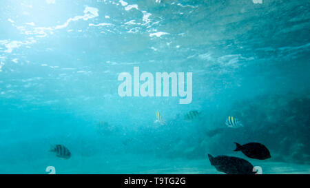 Closeup underwater photo of coral reef fishes swimming in the ocean next to the sandy sea bottom - Stock Photo