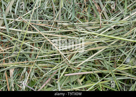 Natural background texture: detail of a pile of freshly cut grasses en herbs that can be used for mulch and straw or other farm and garden uses. - Stock Photo