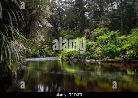 River flows through rainforest with Tree fern (Cyatheales), Oparara River, Oparara Basin, Kahurangi National Park, Karamea, West Coast Region, South - Stock Photo