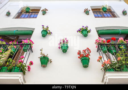 House facade full of green flower pots. Typical andalusian architecture background - Stock Photo