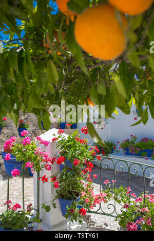 Andalusian courtyard under orange tree. Orange tree on Typical andalusian architecture background - Stock Photo