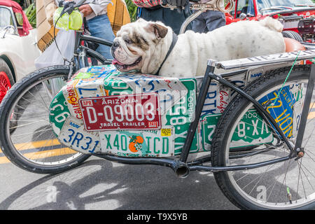 A British/English bulldog in a bicycle sidecar that has the side of