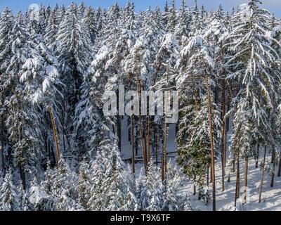 Winter scenery with snowy spruces, Tutzing, Upper Bavaria, Bavaria, Germany, Europe, Winterlandschaft mit schneebedeckten Fichten, Oberbayern, Bayern, - Stock Photo