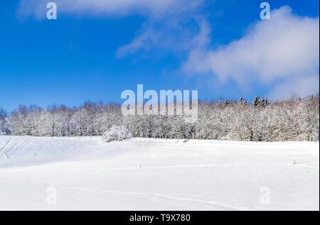 Nice winter scenery after fresh snowfall on the Ilkahöhe, Tutzing, Bavaria, Germany, Europe, Schöne Winterlandschaft nach Neuschnee auf der Ilkahöhe,  - Stock Photo