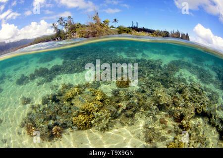 Coral reef at Coconut Island, Kaneohe Bay, Oahu, Hawaii, USA - Stock Photo