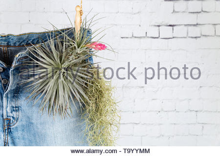 Recycle your Denim jeans concept. Close up on the upper half of a pair of blue jeans hanging on a natural rope with wooden clothespin and plants in th - Stock Photo