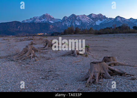 Tree stump in dry lake Forggensee after sunset with a view to Fuessen, Bavaria, Germany - Stock Photo