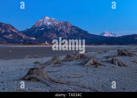 Tree stump in dry lake Forggensee after sunset with a view to Neuschwanstein Castle, Bavaria, Germany - Stock Photo
