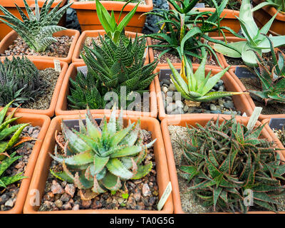succulents in pot over . Scandinavian style interior decoration - Stock Photo