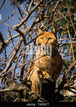 Orange cat climbed on a tree with a nice perched, beautiful animal - Stock Photo