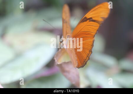 Orange butterfly facing outward with its wings partially opened - Stock Photo
