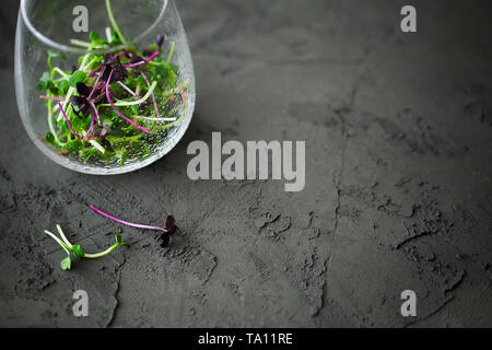 Trendy mixed organic micro greens sprouts in glass with water drops on dark background top view with copy space for text