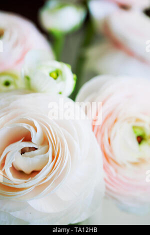 Beautiful tender blossoming of fresh cut bouquet of Ranunculus asiaticus or Persian buttercup close-up.Floral composition for romantic gift - Stock Photo
