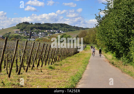 Cyclists on road along the Moselle river in Niederemmel Germany, with vineyards on the steep slopes