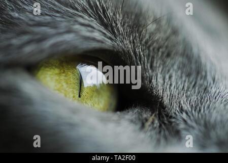 Macro shot of cat eye - Stock Photo