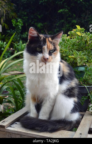 cute three-colored cat standing - Stock Photo