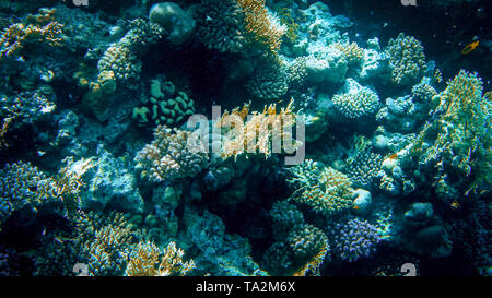 Closeup image of colorful coral reef in the Red sea. Growing anemones, sea weeds and swimming colorful fishes - Stock Photo