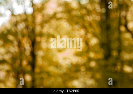 Defocused natural autumn forest background in sunny day. Blurred backdrop. - Stock Photo