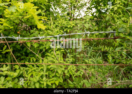 Barbed wire fence in front of a green hedge - Stock Photo