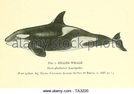 Bulletin - United States National Museum, number 36, 1889. - Stock Photo
