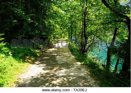 Path in Forrest - Stock Photo