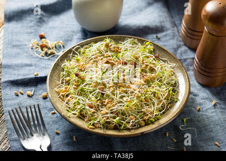 Raw Organic Bean Sprout Salad with Lentils - Stock Photo