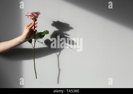 Female hand holding rose on light background - Stock Photo