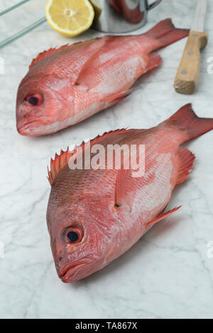 Two Northern red snappers in the kitchen ready to cook - Stock Photo
