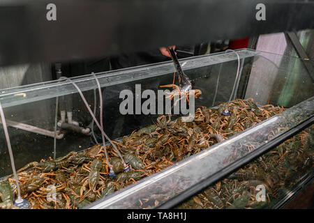 The dealer pulls the crayfish out of water. Crab, crayfish, Oysters for sale in a water aquariums at the street market in France. Seafood concept. - Stock Photo