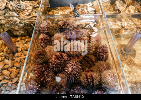 Oysters, sea urchin and mussels for sale in a water aquariums at the street market in France. Seafood concept. - Stock Photo