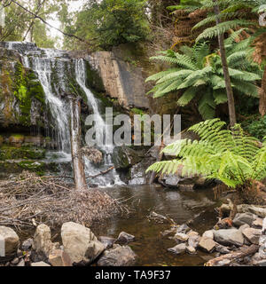 Lilydale Falls consiists of two waterfalls near each other, in the Lilydale Falls Reserve near the township of Lilydale in Tasmania, Australia. - Stock Photo