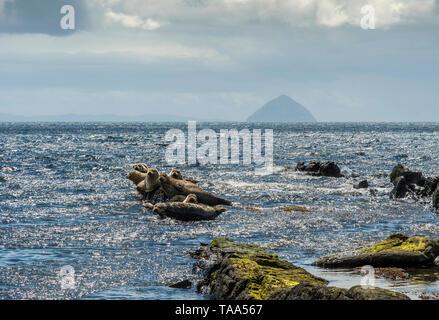 Seals on rocks at Kildonan with Ailsa Craig - Stock Photo
