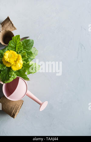 Gardening background with yellow gerbera, gardening tolls and garden flowers plant on gray concrete background. Top view, place for text. - Stock Photo