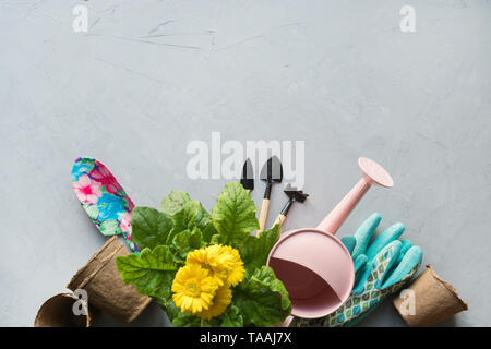 Gardening background with yellow gerbera, tolls and garden flowers plant on gray concrete background. Top view, place for text. - Stock Photo