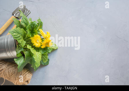 Gardening background with yellow gerbera, gardening tolls and garden flowers plant on gray concrete background. Top view, place for text. Horizontal s - Stock Photo