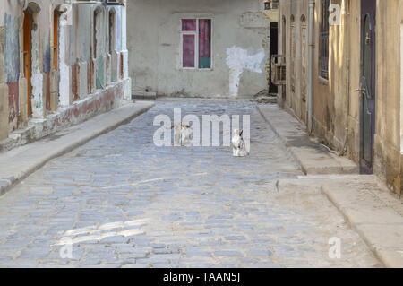 street cats sitting in waiting of food before one of the building of old city Baku - Stock Photo