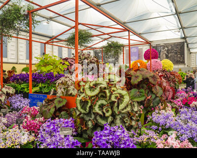 Beautifully designed gardens with plants and variegated flower compositions at RHS Chelsea Flower Show. - Stock Photo