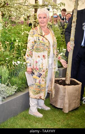 Dame Judi Dench was presented with a sapling elm tree to launch the re-elming of the British Countryside starting this year. Hillier Nurseries, RHS Chelsea Flower Show, London - Stock Photo