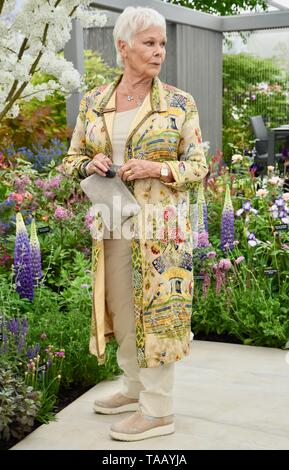 Dame Judi Dench was presented with a sapling elm tree to launch the re-elming of the British Countryside starting this year. Hillier Nurseries, RHS Chelsea Flower Show, Royal Hospital, London. UK Stock Photo