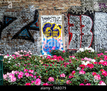 Spring flowering Rhododendrons and graffiti on old weathered wall In Public park. Volkspark am Weingbergsweg, Mitte, Berlin - Stock Photo