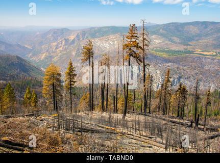 Aftermath of wild fires, Yosemite National Park, California, 2018, by Bill Lea/Dembinsky Photo Assoc - Stock Photo